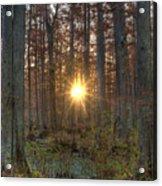 Heron Pond Sunrise Acrylic Print by Steve Gadomski