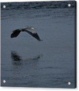 Heron Reflections 2 Acrylic Print