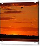 Heron Sunset Acrylic Print