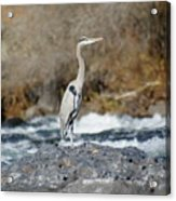 Heron The Rock Acrylic Print