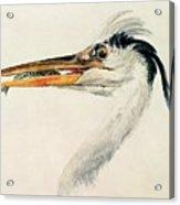 Heron With A Fish Acrylic Print