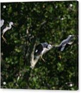 Herons Landing Acrylic Print