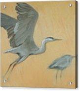 Herons Acrylic Print