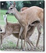 Hey, Can I Have Some? Acrylic Print