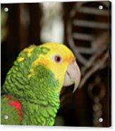 Hey Pretty Birdie Acrylic Print