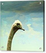 Hi, I Am The Ostrich Acrylic Print