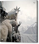 Hi We Are The Mountain Goats Acrylic Print