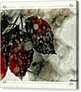 Hibernation Acrylic Print