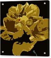 Hibiscus 14 Acrylic Print