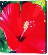 Hibiscus 2 Acrylic Print