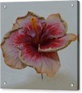 Hibiscus 3 Acrylic Print