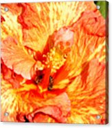 Hibiscus And Bees Acrylic Print