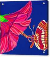 Hibiscus And Butterfly Acrylic Print