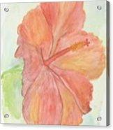 Hibiscus Acrylic Print