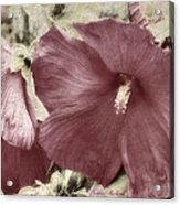 Hibiscus Floral Series  Acrylic Print