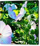 Hibiscus Garden Acrylic Print