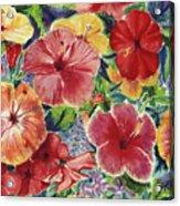 Hibiscus Impressions Acrylic Print