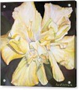 Hibiscus Jaune Acrylic Print