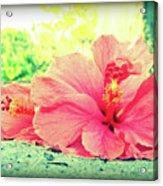 Hibiscus Love Acrylic Print