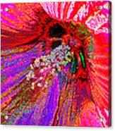 Hibiscus Macro Abstract Acrylic Print