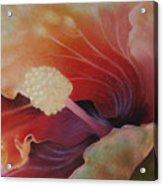 Hibiscus Macro Acrylic Print