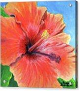 Hibiscus Passion Acrylic Print
