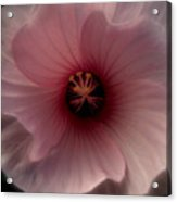 Hibiscus Perfection Acrylic Print