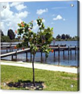 Hibiscus Rosasinensis With Fruit On The Indian River In Florida Acrylic Print