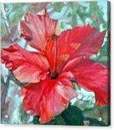 Hibiscus Rouge Acrylic Print