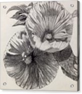 Hibiscus Sketch Acrylic Print