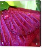 Hibiscus Square Acrylic Print