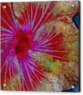 Hibiscus Stained Glass Acrylic Print