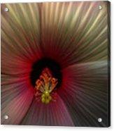 Hibiscus Supreme Acrylic Print