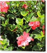 Hibiscus Tree Acrylic Print