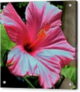 Hibiscus With A Solarize Effect Acrylic Print