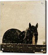 Hickory Acrylic Print