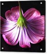 Hidden Beauty Acrylic Print