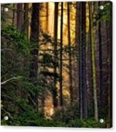 Hidden In The Forest Acrylic Print