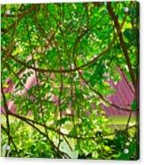 Hidden In The Garden Acrylic Print