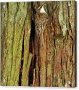 Hidden On The Tree Acrylic Print