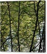 Hidden Pond Natural Fence Acrylic Print