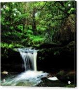 Hidden Rainforest - Painterly Acrylic Print