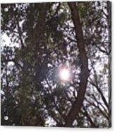 Hidden Sun Acrylic Print