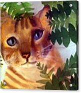 Hide And Seek Cat Acrylic Print
