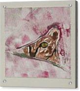 Hide And Seek Acrylic Print