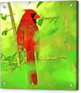 Hiding Behind The Leaves - Male Cardinal Art Acrylic Print