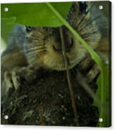 Hiding In Plain Sight Acrylic Print