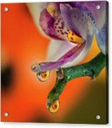 Hiding Ladybug Acrylic Print