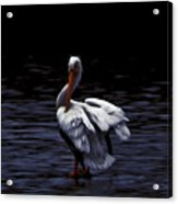 High Contrast Pelican Acrylic Print