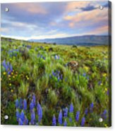 High Desert Spring Acrylic Print by Mike  Dawson